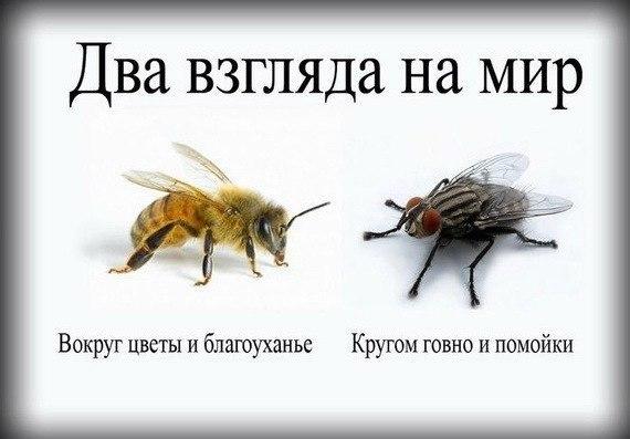 Василий Сенченко, а ты кто: пчела или муха?